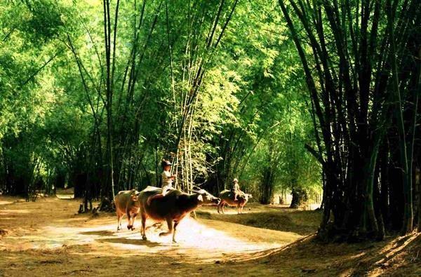 Tư tưởng làng xã ở Việt Nam