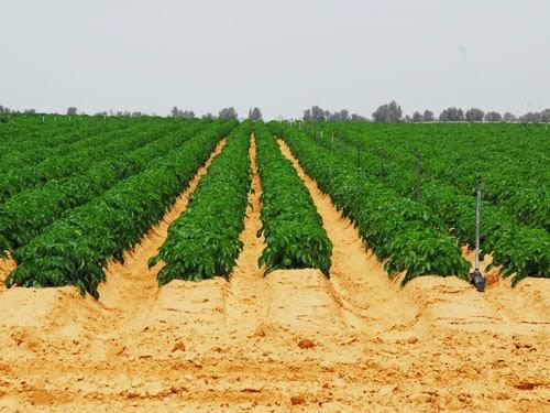 Sản xuất nông nghiệp bền vững ở Israel và hàm ý chính sách cho Việt Nam